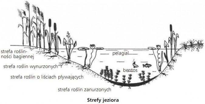 Strefy jeziora